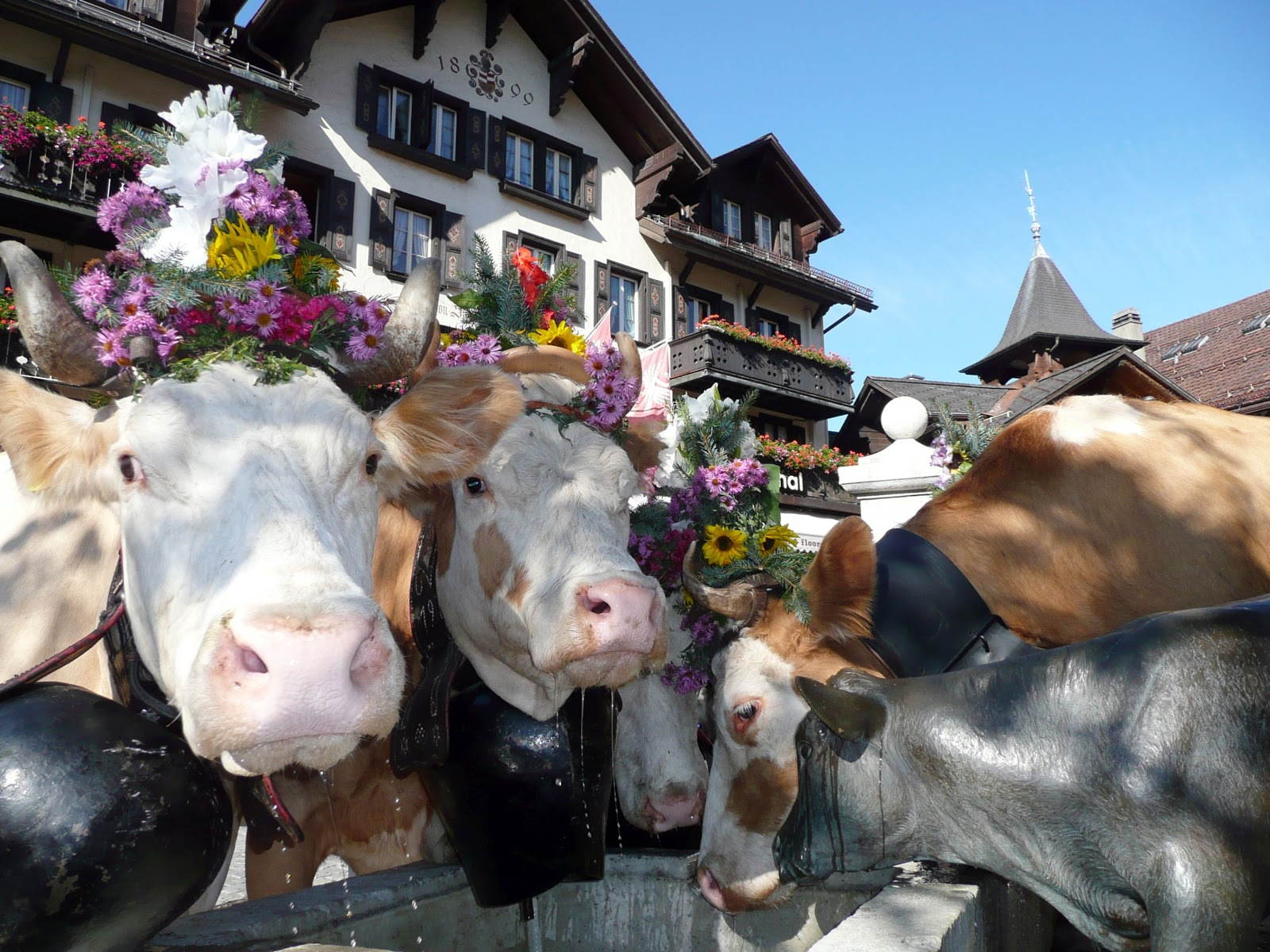 'Suufsunntig' or Drinking Sunday in Gstaad, Switzerland. Photo: Gstaad Saanenland Tourismus.