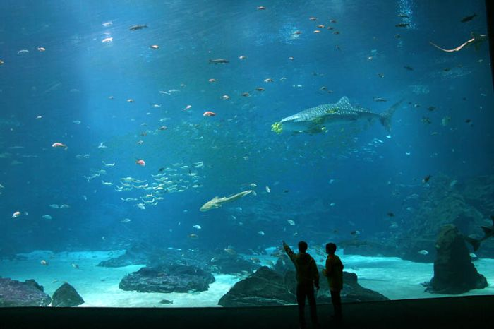 Pix Grove: World's Largest Aquarium in Atlanta