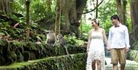 Ubud Monkey Forestis - Bali Ubud Tour
