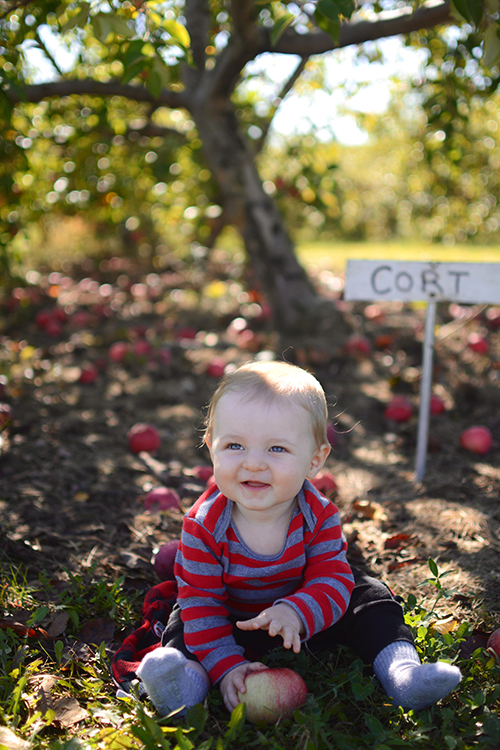 Apple Picking | My Darling Days