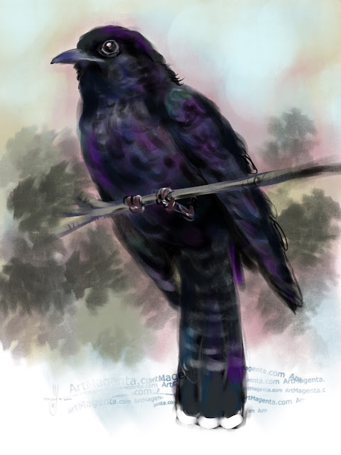 Black Cuckoo bird painting by Artmagenta