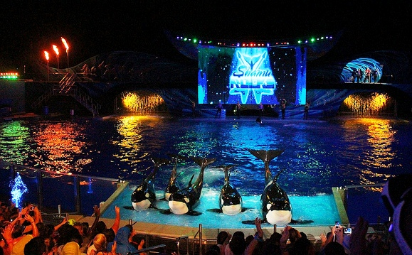 Summer Nights SeaWorld Orlando