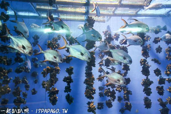 台灣西海岸傳統的牡蠣養殖