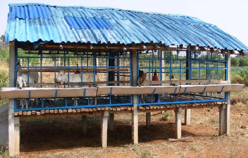 Establishing a Dairy Farm in Bangladesh