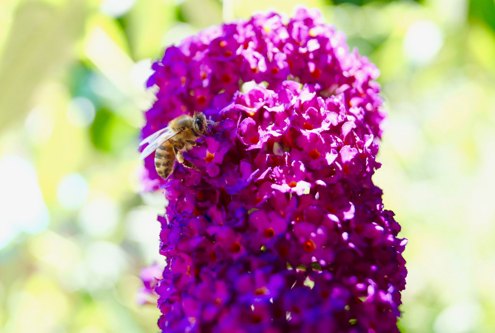 spring flower in bloom with bee