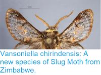 https://sciencythoughts.blogspot.com/2018/05/vansoniella-chirindensis-new-species-of.html