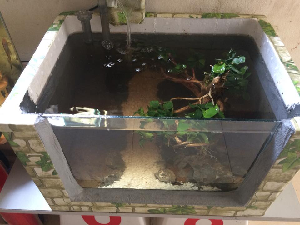 Hồ cá và cây thủy sinh trong thùng mút