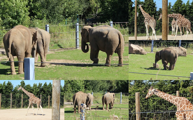 Twycross Zoo Review
