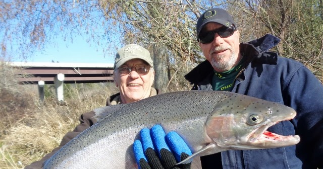 The umpqua river is in perfect shape for steelhead fishing for Oregon fishing license cost 2017
