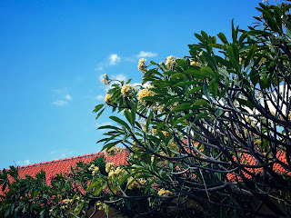 Beautiful Yard With Frangipani Flower Plants Ornamented The House Bali Indonesia