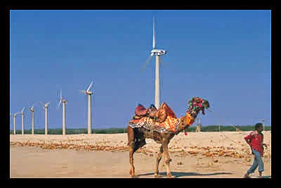 Camel at wind farm  (Credit: borgenproject.org) Click to enlarge.