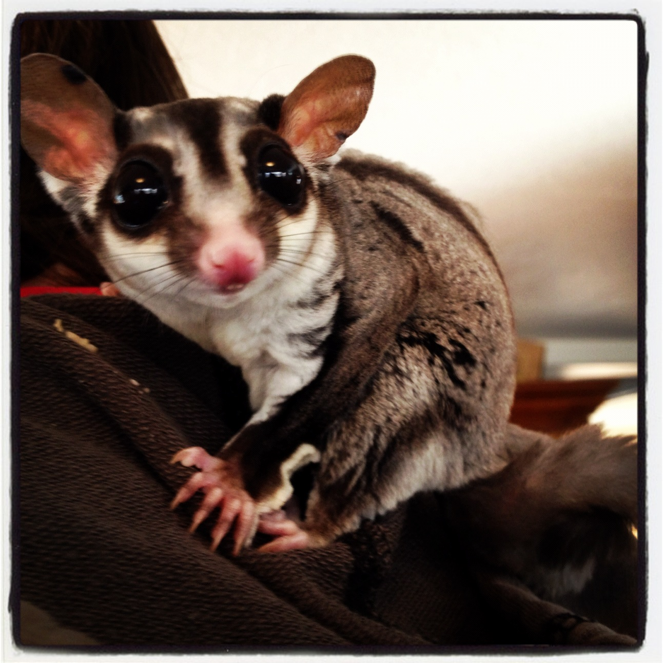 Pen Pals Picture Books Searching For Sugar Gliders In Books