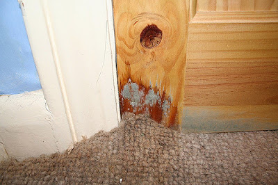 water damage, carpet mould