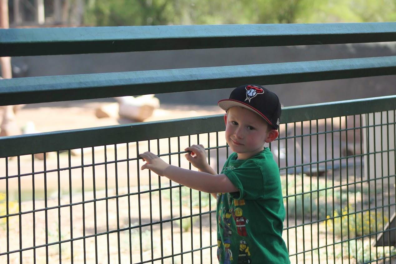phoenix zoo benjamin