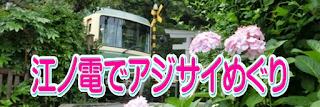 江ノ電とアジサイ