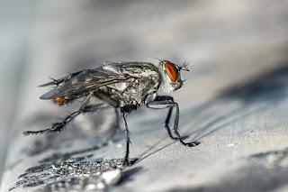 الحشرات في الحلم ◁ تفسير حلم الحشرات تطير بكثره