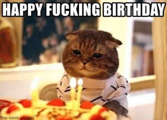 hilarious cat memes wishing birthday
