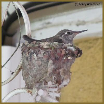 baby hummingbird | via baileyunleashed.com