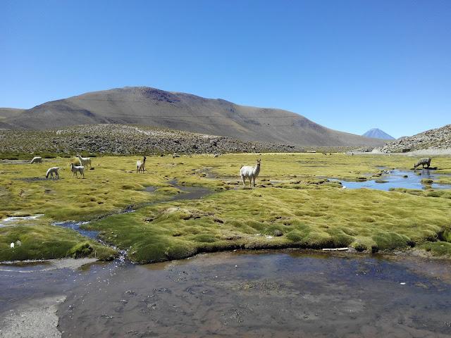 Machuca Atacama