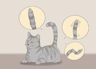 愛猫とコミュニケーションをとる方法