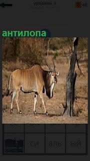 Одинокая антилопа бродит в лесу около дерева