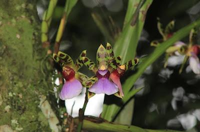 Legado das Águas realiza 2º Workshop Orquídeas na Mata Atlântica