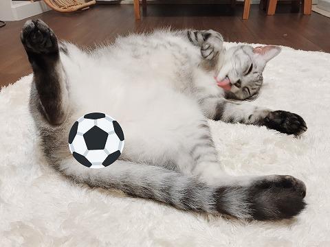 ヘソ天で毛づくろいしているサバトラ猫