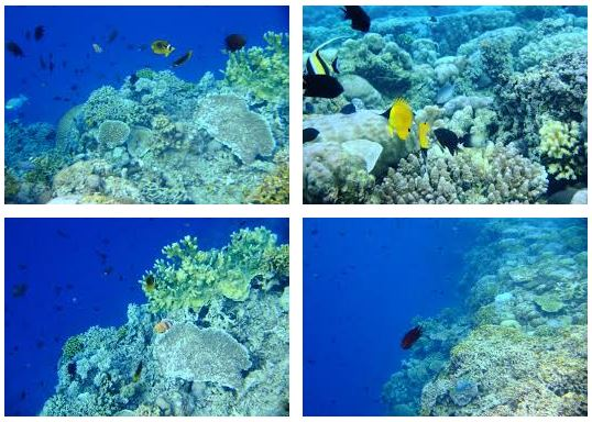 Bunaken Marine Park: The Most Beautiful and Popular in North Sulawesi, Indonesia