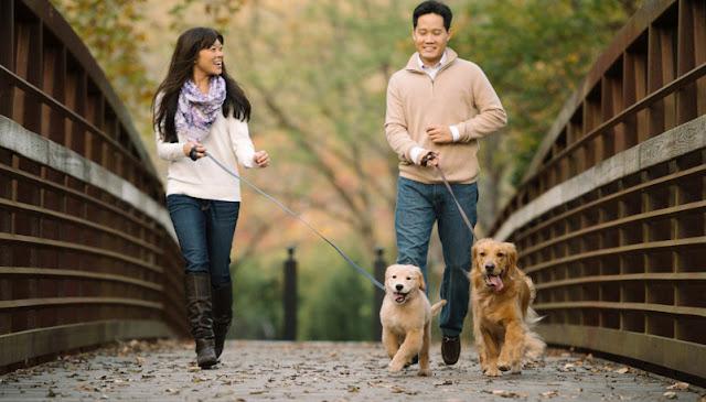 China Keluarkan Larangan Jalan-jalan bersama Anjing, Ini Pemicunya