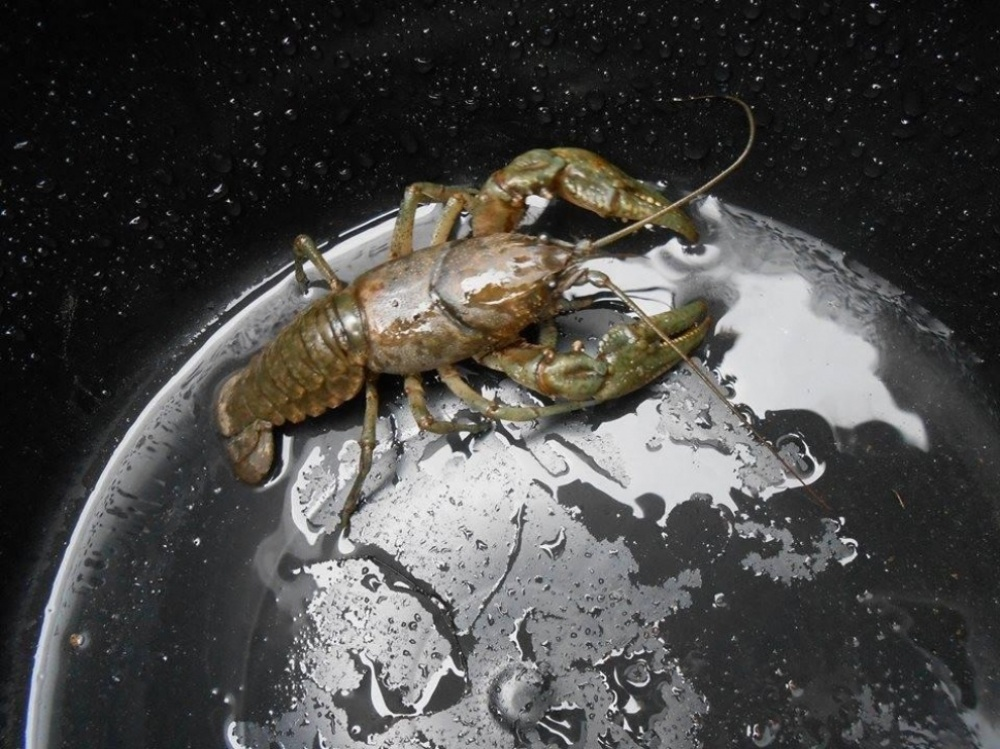 The 100 best photographs ever taken without photoshop - It's just a crayfish in the bucket but it looks like it's capturing the world