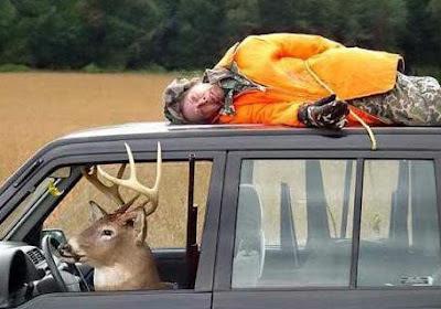 Tod Menschen Jäger auf Auto lustige Bilder Selbstmord