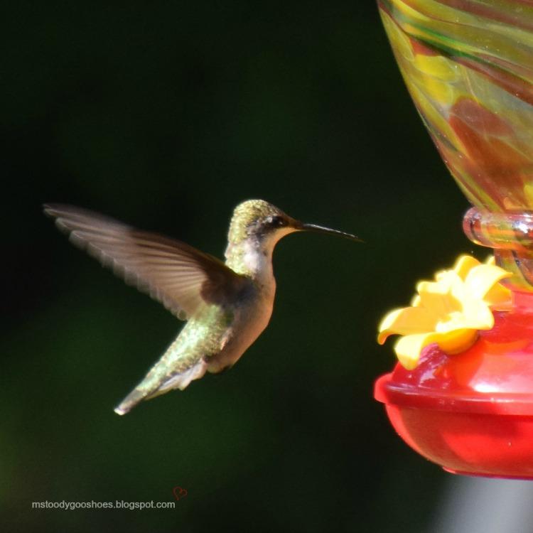 Hummingbird at my feeder! | Ms. Toody Goo Shoes