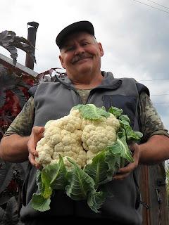 Урожай на даче