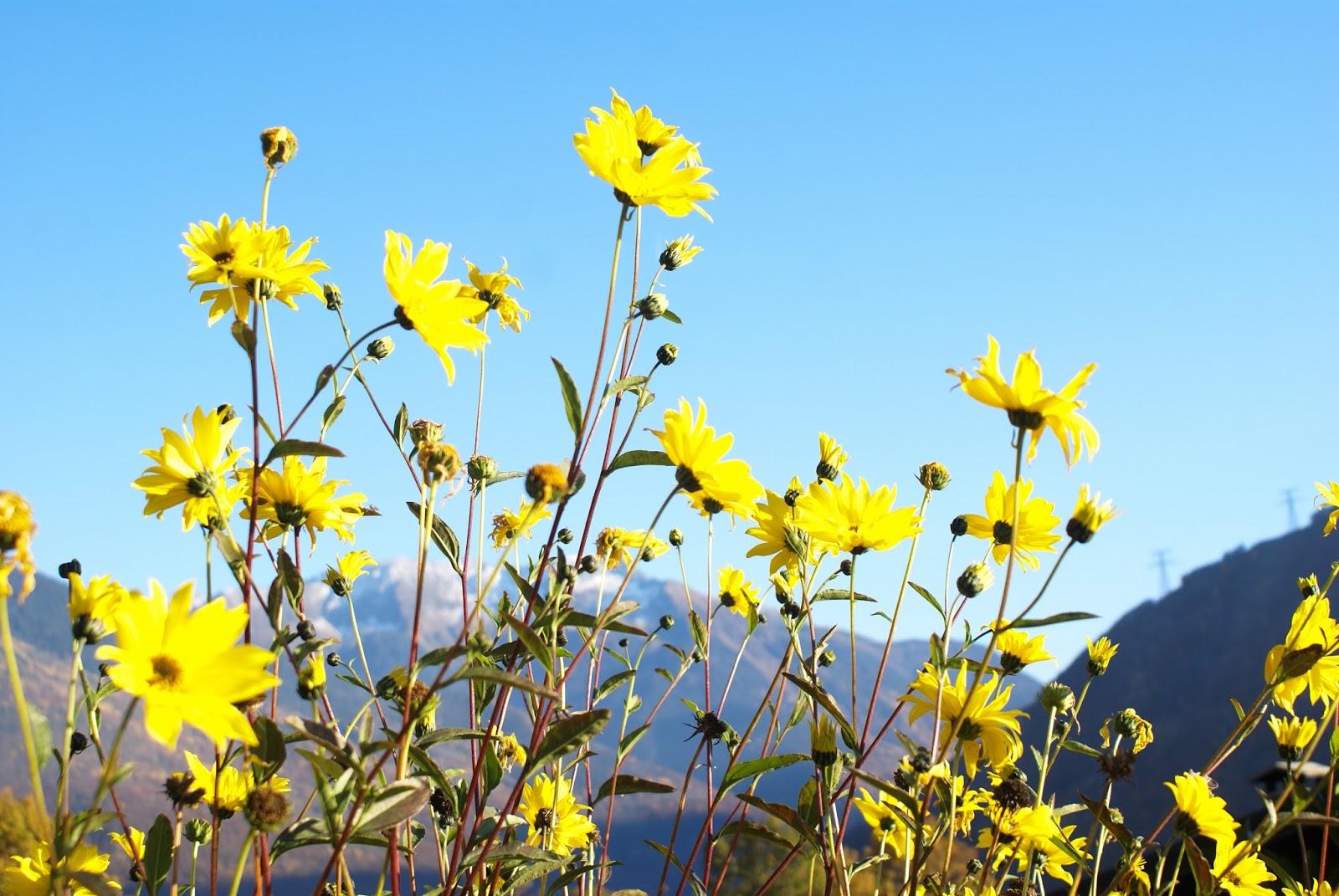 automne savoie fleurs nature