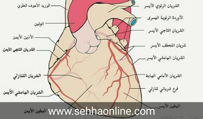 Symptoms of heart disease, heart disease, the heart, Causes of heart disease, Heart pressure, heart attack,اعراض مرض القلب، مرض القلب، القلب، اسباب مرض القلب، ضغط القلب، الجلطة القلبية،