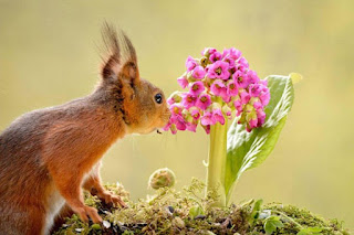 صور الربيع