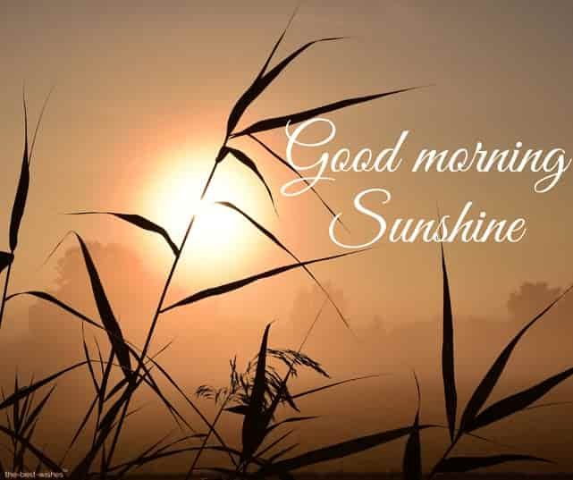sweet good morning sunshine image