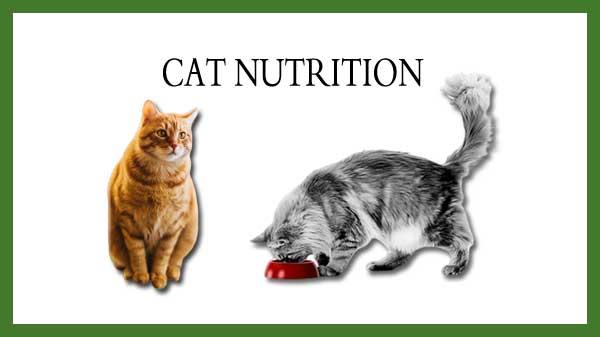 Cat's Nutrition