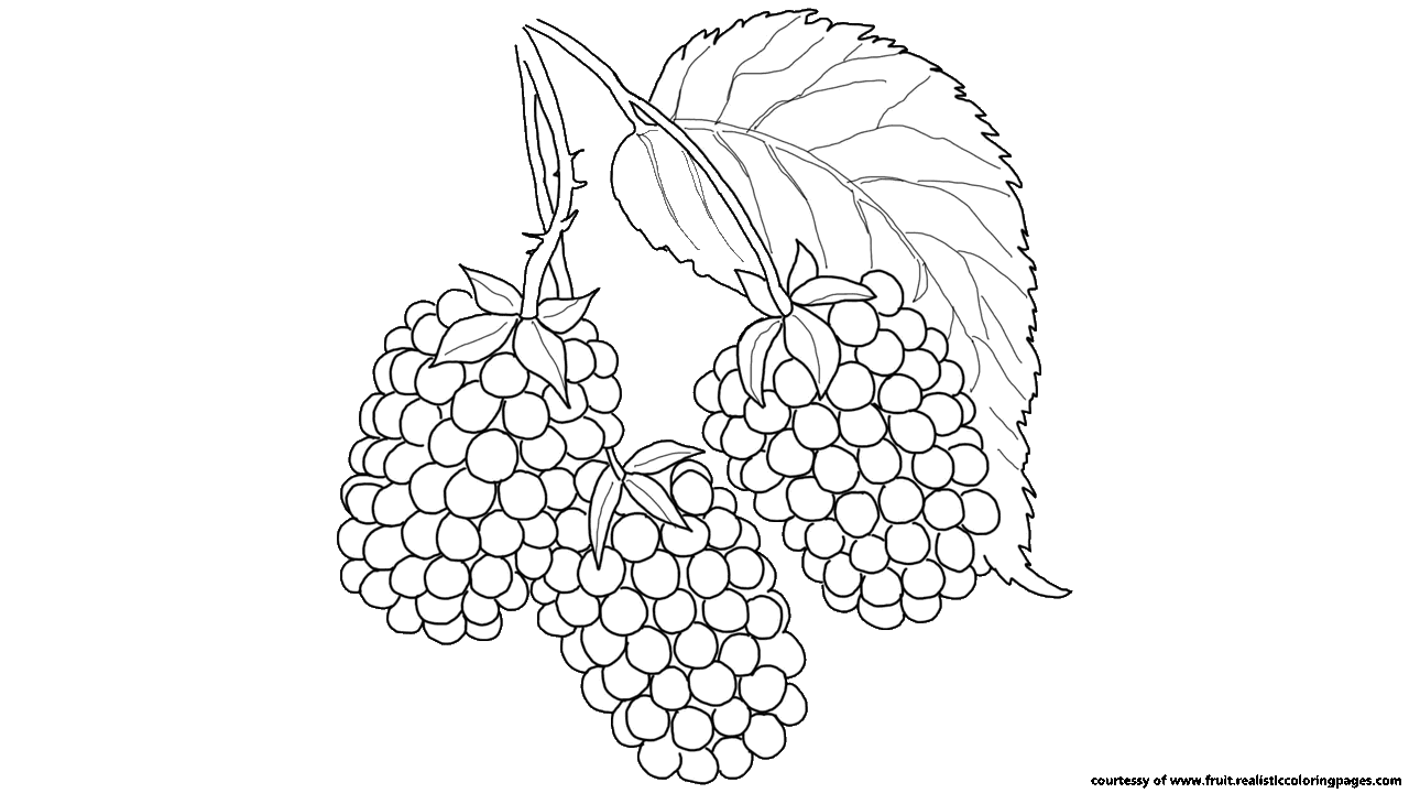 Free 7 Awesome Blackberry Fruit Clipart Fruit Names AZ