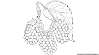 blackberry fruit clipart black and white