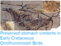 http://sciencythoughts.blogspot.co.uk/2015/01/preserved-stomach-contents-in-early.html
