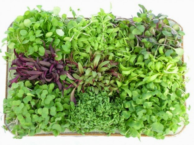 Fresh Home Grown Micro Greens