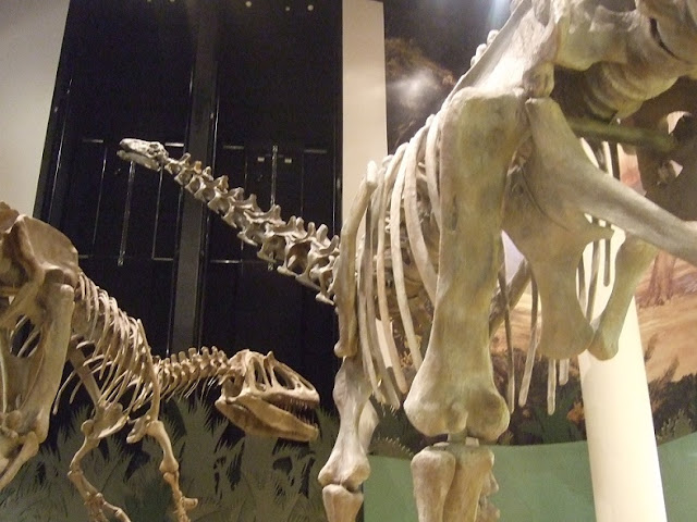 Dinosaurs: Juvenile, adult or senior?