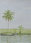 http://bijupainting.blogspot.in/2016/11/backwaters-of-kerala-2-watercolor-on.html