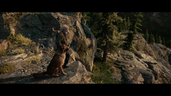 The Call of the Wild (2020) HD 1080p y 720p Latino 5.1 Dual