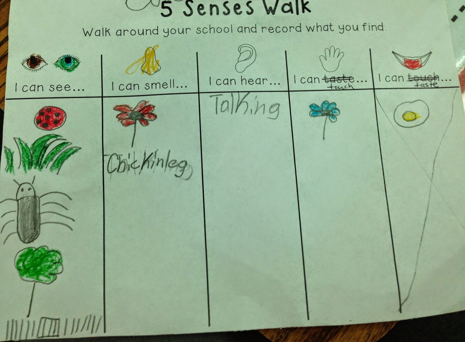 The Adventures Of A K 1 Teacher Exploring Our 5 Senses