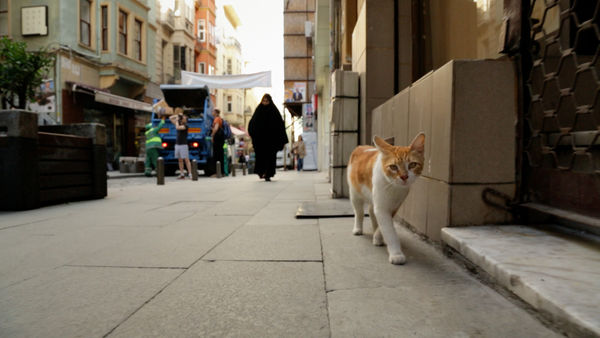 cats in istanbul documentary