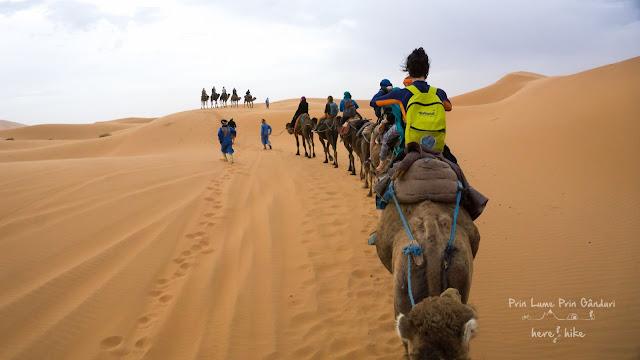morocco sahara desert dromedary caravan