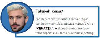 Translate bahasa inggris Hair, Bahasa Indonesianya hair