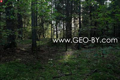 Partisan forest of Puszcza Nalibocka